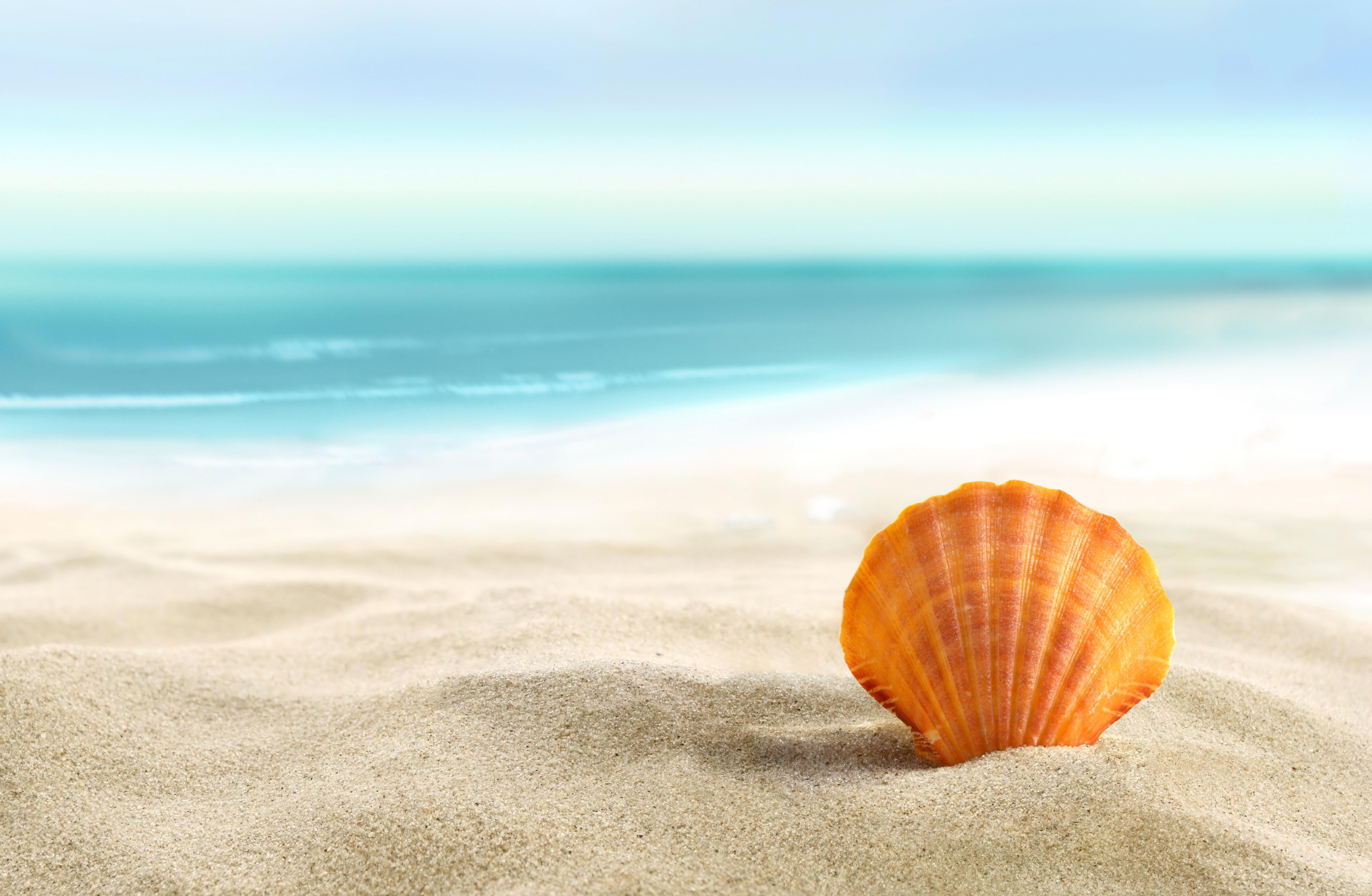 Resist Ocean Beach
