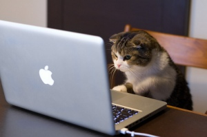 reading-kitten