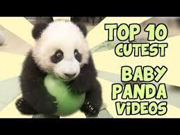 top 10 cutest panda